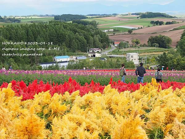 北海道DAY4 (38).JPG