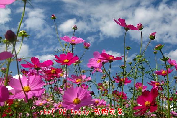 新-谷關&新社 092.jpg