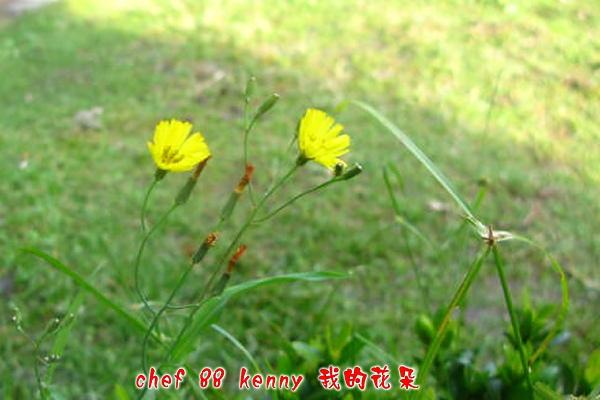 新-谷關&新社 060.jpg