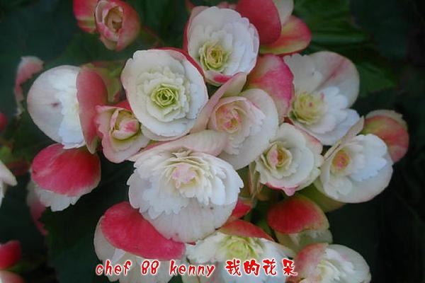 新-谷關&新社 046.jpg