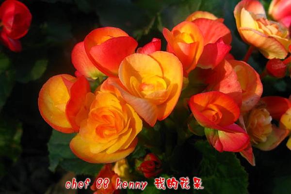 新-谷關&新社 044.jpg