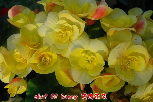 新-谷關&新社 043.jpg