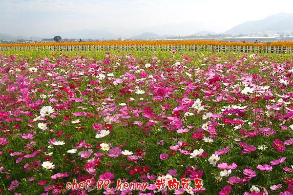 新-谷關&新社 123.jpg