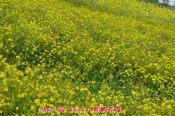 新-谷關&新社 114.jpg