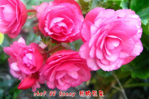 新-谷關&新社 045.jpg