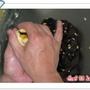 1-蛋黃酥 035.jpg