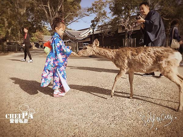 4. 奈良公園  (2).jpg