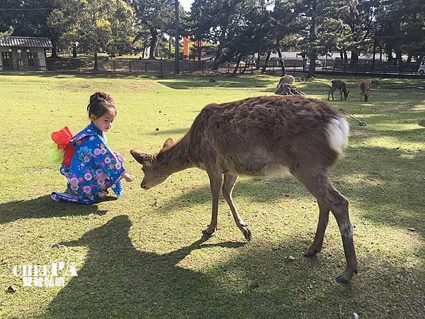 4. 奈良公園  (4).jpg