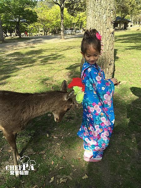 7. 奈良公園小鹿撒嬌 (38).jpg