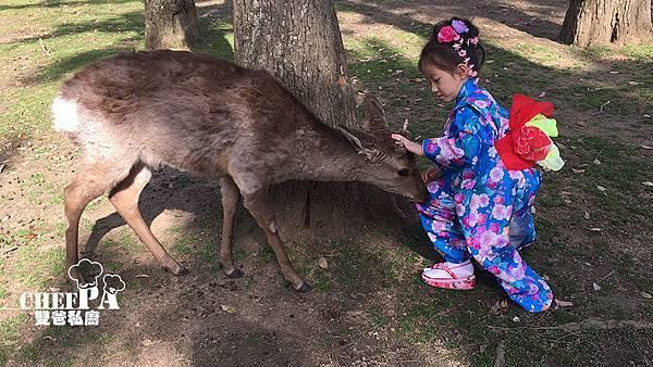 10. 輕撞雙雙的小鹿 (6).jpg
