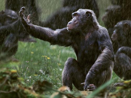 猴子淋雨.jpg