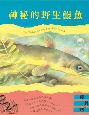 神秘的野生鰻魚.jpg