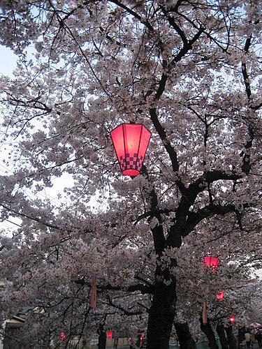 日本大阪賞櫻什麼時候來好呢?