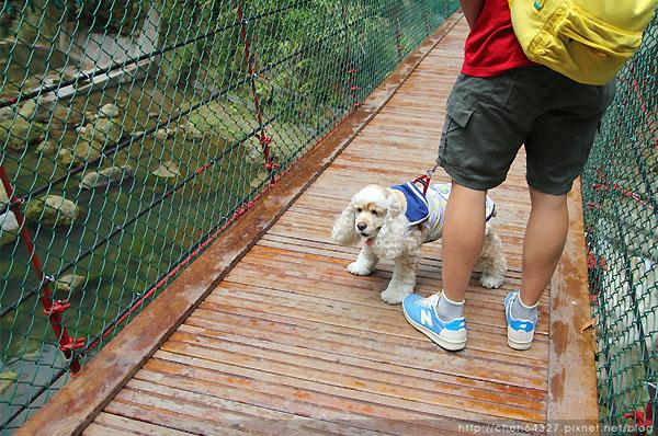 2015-05-01   杉林溪   99吊橋 jpg