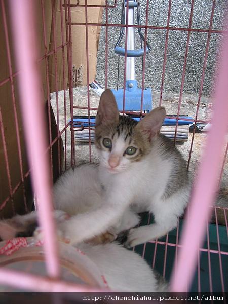 99-09-18 猴峒尋貓之旅 012.jpg