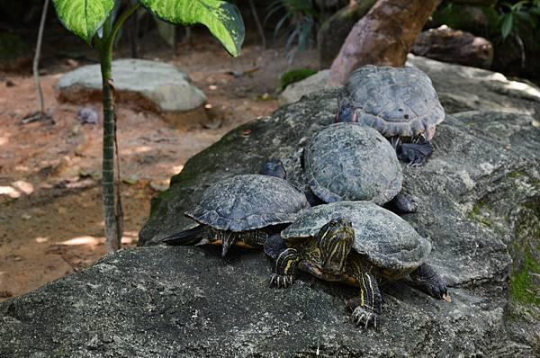 AWW turtle.jpg