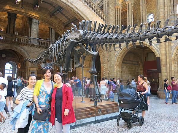 自然史博物館 Museum of Natural History