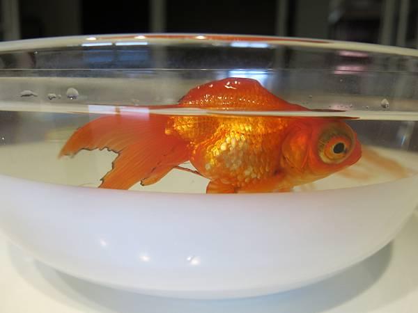 02-小金魚-IMG_8323