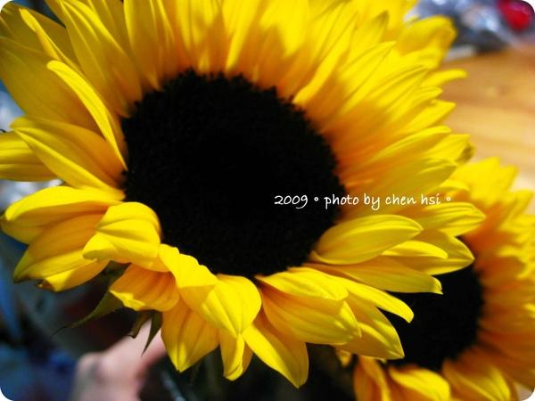 2009.向日葵.jpg