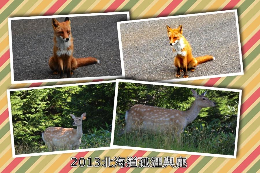 8:4狐與鹿