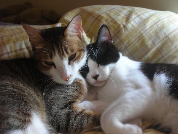 我的兩隻愛貓