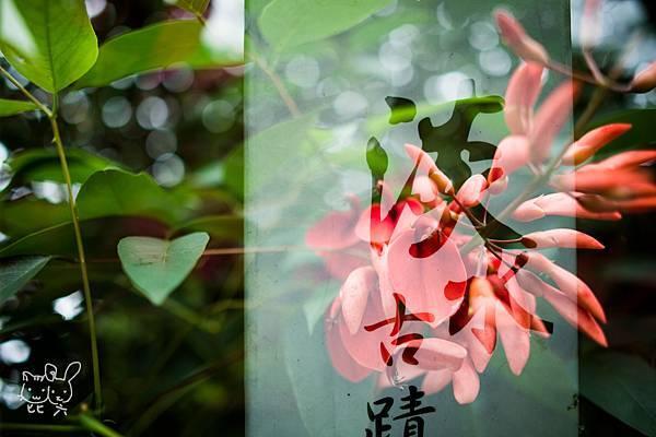 20140504-DSC_4795.jpg