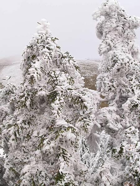 20080218-20080218合歡山之旅49.jpg