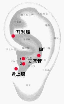 呼 吸 系 統 疾 病.jpg