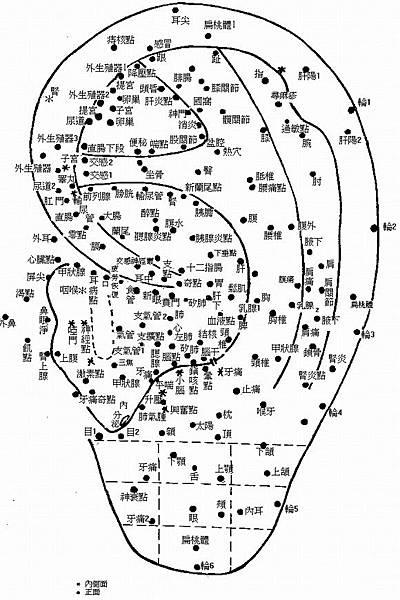 耳朵反射區與全息圖2.jpg