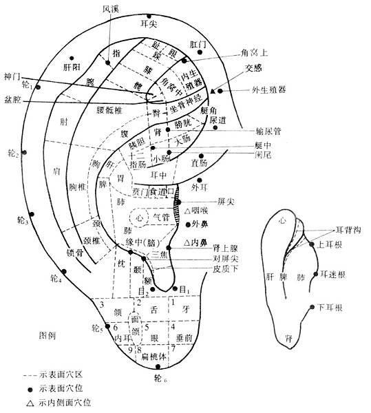 耳朵反射區與全息圖1.jpg