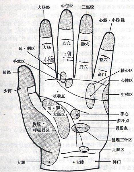 手部反射區與全息圖2.jpg