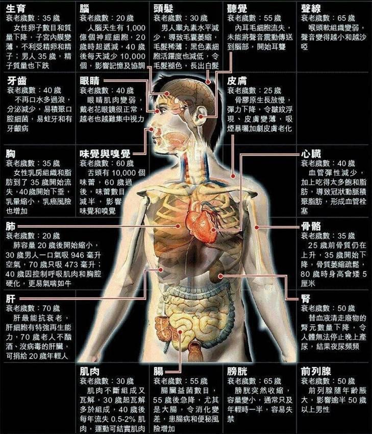 人類各器官衰老歲數