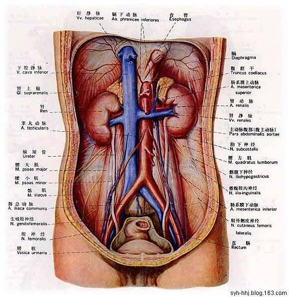 63人體消化系统.jpg