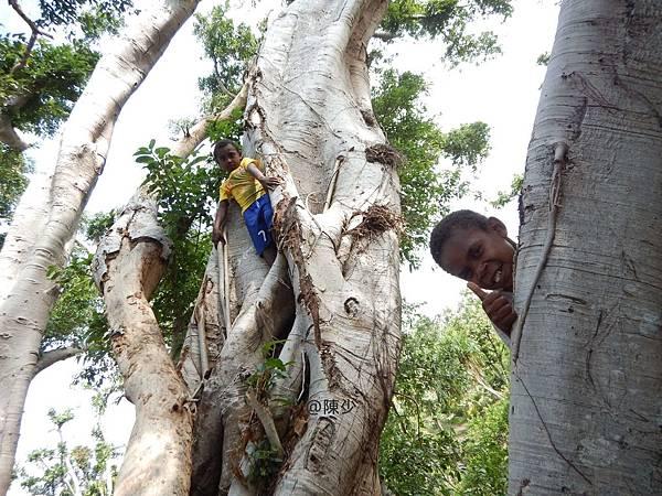爬樹的孩子/陳少.jpg