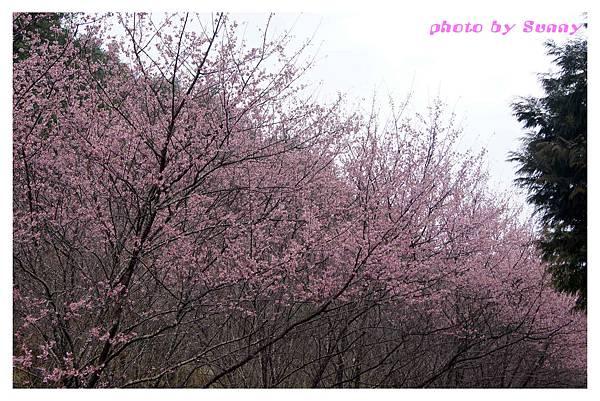 武陵農場5.jpg