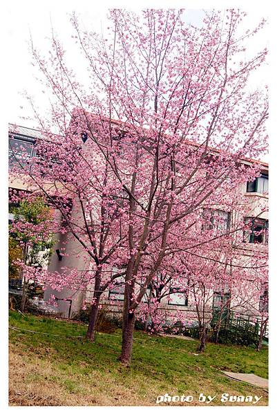 武陵農場31.jpg
