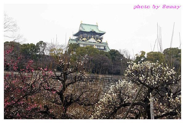2014京阪大阪城10.jpg