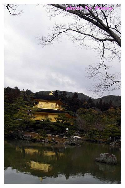 2014京阪金閣寺13.jpg