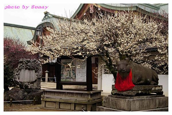 2014京阪北野天滿宮1.jpg