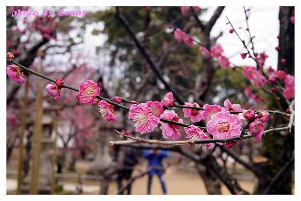 2014京阪北野天滿宮19.jpg