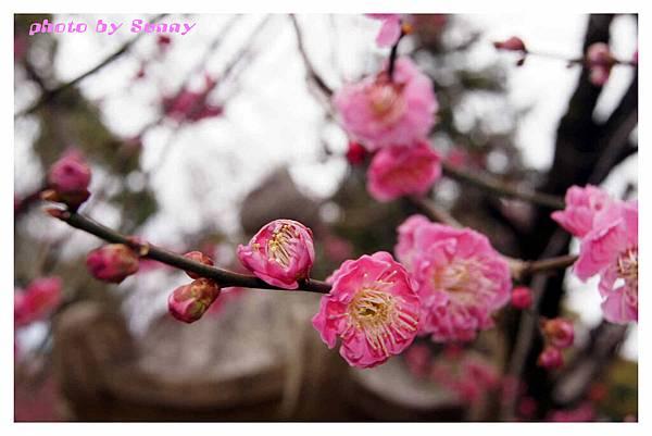 2014京阪北野天滿宮20.jpg