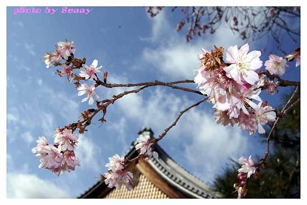 2014京阪妙蓮寺7.jpg