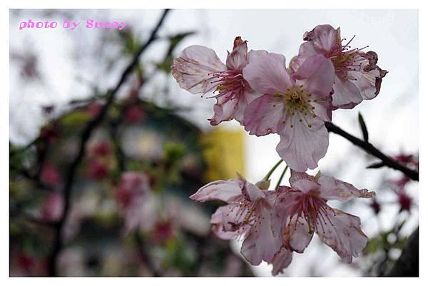 2014天元宮2.jpg