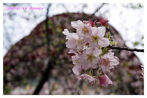2014天元宮4.jpg