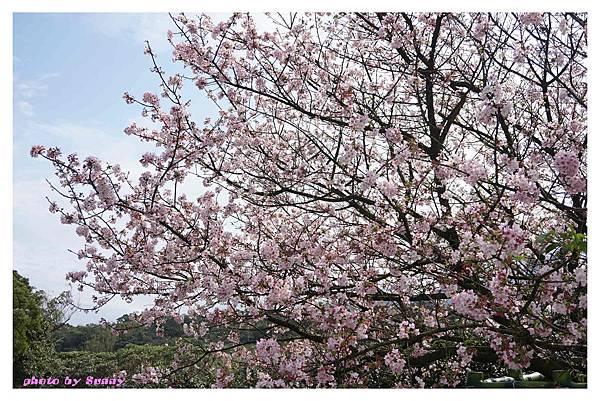 2014天元宮10.jpg