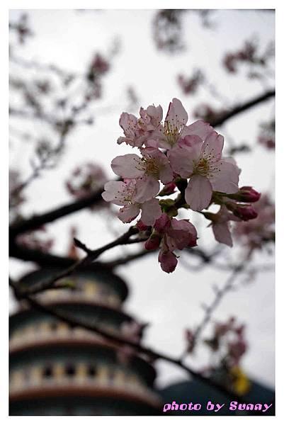 2014天元宮26.jpg