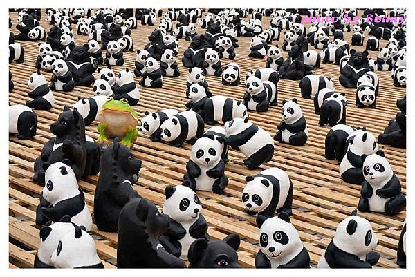 1600貓熊兩廳10.jpg