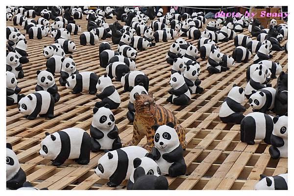 1600貓熊兩廳17.jpg