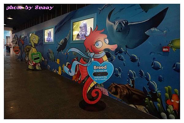 墨爾本水族館2.jpg