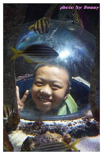 墨爾本水族館4.jpg